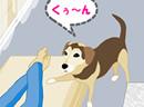 帮宠物狗找食物