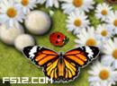 蝴蝶驯育螵虫宝宝