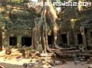 柬埔寨寻物