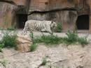 动物园奇妙之旅