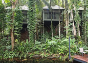Daintree Rainforest Escape