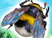 养育蜜蜂的生活
