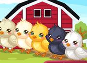 复活节孵小鸡