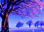 逃离雪域森林