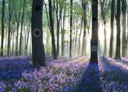 逃出黎明的森林