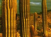 逃出仙人掌沙漠