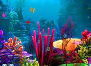 迷失深海的黄金鱼2