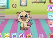 照顾可爱小猫咪-你要参加一个养宠物的比赛,现在就开始养一..