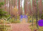 Mysterious Autumn Forest 4