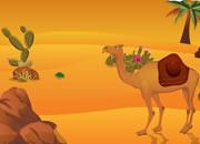 撒哈拉沙漠逃生