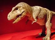 逃出恐龙博物馆