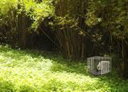 帮小熊猫逃出笼