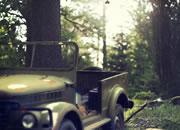 深入丛林逃脱