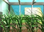 逃出绿色温室
