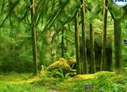 帮狮子逃离森林