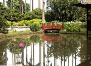 Escape From Rio De Janeiro Botanical Garden