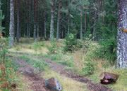 逃出青苔森林2