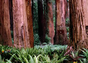 Escape From Giant Sequoia National Monument