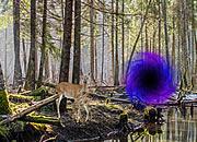 逃离神秘森林通道