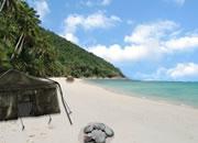 热带小岛生存3