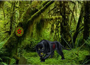 丛林历险记