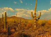 Cactus Desert Camel Rescue Escape