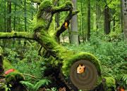 野外森林松鼠逃脱
