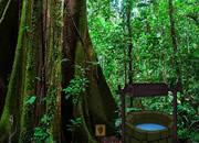 营救森林部落