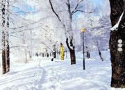 逃离雪地森林