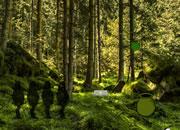 逃离原始森林