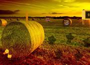 Farm Land Escape