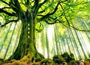 昆虫森林逃离-