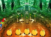 猩红金刚鹦鹉森林逃脱