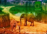 逃离非洲动物园