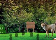 野生狐狸森林逃脱