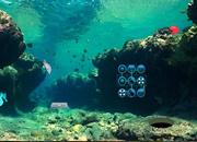 水下鱼救援