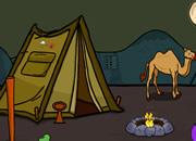 营救骆驼逃离沙漠