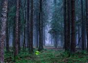 神秘落日森林