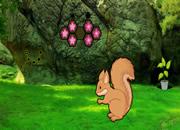 失恋的松鼠救援-