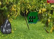 Grove Fruit Forest Escape