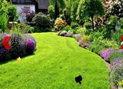 美麗的花園