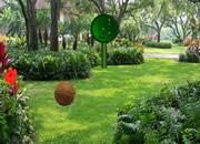 寻找彩色花园鸟-