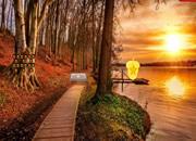 阳光秋季森林逃离