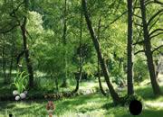 Rainforest Fun Escape