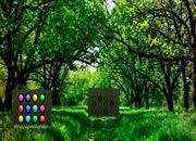 Nature Forest Trees Escape