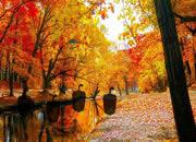 逃离秋季湖岸森林