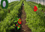 Strawberry Farm Fairy Escape