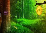 迷人的森林逃离