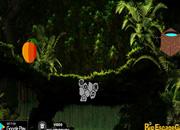Rainforest Landscape Jungle Escape