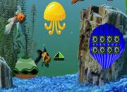 Crowntail Betta Fish Escape